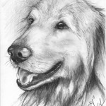 """Rocky"" Pet Portraits in Charcoal"
