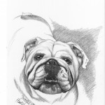 """Bubbles"" Pet Portraits In Charcoal"