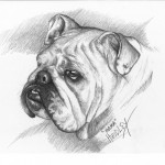 """Mama"" Pet Portraits In Charcoal"