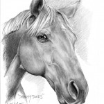"""Smarty Jones"" Pet Portraits In Charcoal"