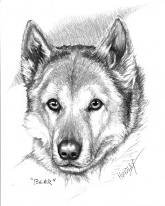 """Bear"" Pet Portraits In Charcoal"