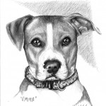 """Emma"" Pet Portraits In Charcoal"