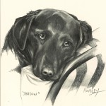 """Shadow"" Pet Portraits In Charcoal"