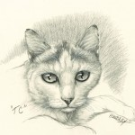 """TC"" Pet Portraits In Charcoal"