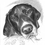 """Sarge"" Pet Portraits In Charcoal"