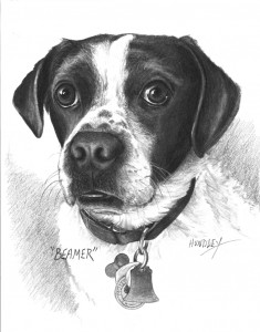 """Beamer"" Pet Portraits In Charcoal"