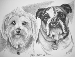"""Maxx and Matilda"" Pet Portraits In Charcoal"