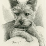 """Tanner"" Pet Portraits In Charcoal"