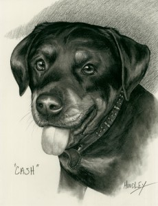 """Cash"" Pet Portraits In Charcoal"