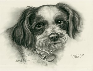 """Oreo"" Pet Portraits In Charcoal"