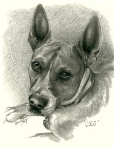 """Cleo"" Pet Portraits In Charcoal"