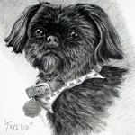 """Tuxedo"" Pet Portraits In Charcoal"