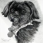 """Tuxedo"" Pet Portraits In Charcoal"