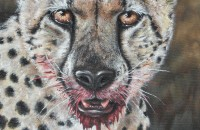 """Cheetah: Fresh Kill"" Acrylic 11""x14"" Gallery wrap Finish"