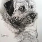 """Eleanor"" Pet Portraits In Charcoal"